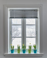 Window with blind, decorated with colorful Flowerpots of Dwarf Daffodils, Narcissus. Springtime with snow outside.