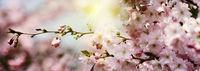 blüten frühling sonne banner