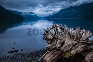 Old tree stump on the shore of Crescent Lake, Washington
