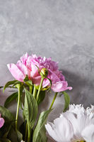 Branches of white and pink peony with buds on a gray background with copy space. Mother's Day Card. Flat lay