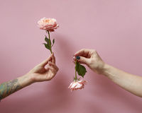 Women's hands are holding roses up and down on a pink background with copy space. Postcard layout