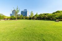 city park lawn