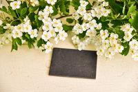 leere Tafel Weißdorn Blüten Crataegus auf Holz