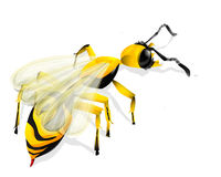 Wasp over white