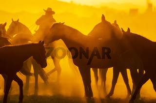 Herd Of Horse Being Corralled By Mexican Horsemen At Sunrise