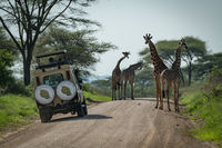 Four Masai giraffe and jeep on track