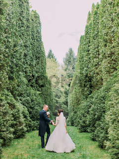The walk of the happy newlywed couple along the garden with high bushes. Back view.