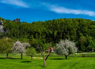 Baumblüte an der Bastei