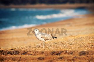 Seagull is on seaside - symbol of sea.