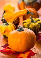 Thanksgiving and Halloween pumpkins still life