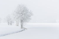 Bäume im Nebel mit Raureif bedeckt