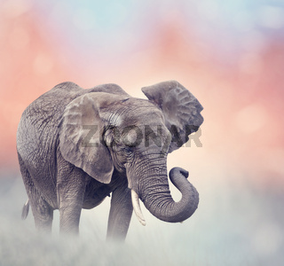 African Elephant in the grassland