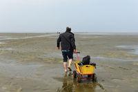 Wanderer im Watt zieht Bollerwagen über die Wattfläche, Wattenmeer, Westerhever, Deutschland