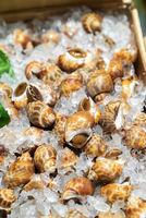 Babylon snails seafood on ice