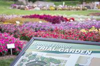 University Annual Flower Trial Garden