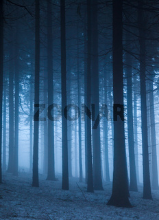 A wintery forest with snow and fog