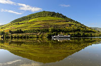 Weinberg spiegelt sich im Fluss Douro bei Pinhao