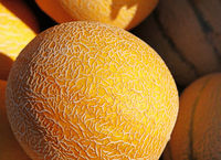 Close up fresh cantaloupe melons on retail display