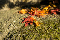 Autumn leaves on rocks