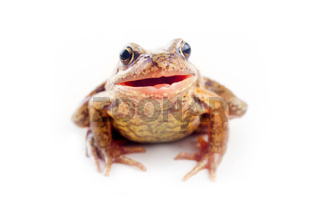 Funny frog on white background.