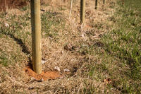 New wooden fence posts on a field.