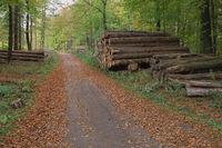 Deister - Polter an einem herbstlichen Waldweg, Deutschland