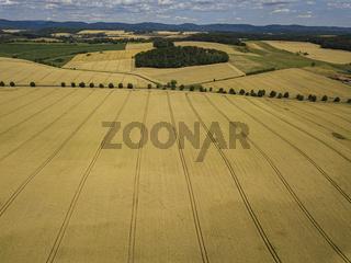 Crops Field Aerial