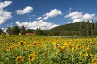 Geilweilerhof mit Sonnenblumenfeld