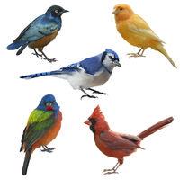 Birds set watercolor painting