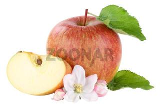 Apfel Blüte Frucht geschnitten Freisteller freigestellt isoliert