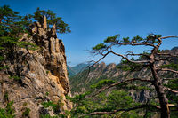 Pine tree and rock cliff , Seoraksan National Park, South Korea