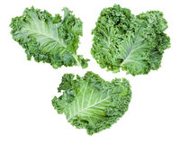 leaves of curly-leaf kale (leaf cabbage) isolated