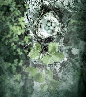 Cozy Arctic redpoll (Acanthis hornemanni) nest