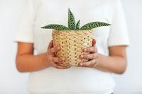 Hands of woman holding green in little flower pot