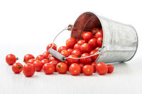 Tomatoes spilled out from metal bucket