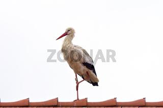 Storch auf einem Dach