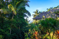 Traditional house in jungle forest, Sidemen, Bali, Indonesia