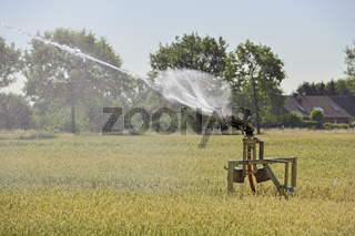 Wassermangel... Hochsommer *Nordrhein-Westfalen*, Regnerwagen wässert ein Getreidefeld