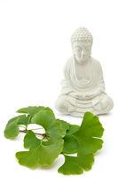 Buddha mit Ginkgo