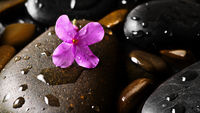 Grey wet pebbles with flower background wallpaper