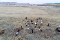 The herd of horses in autumn on pasture, grazing horses