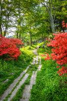 Forest path around Chuzenji lake, Nikko, Japan