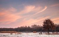 Bench and oak tree near the frozen lake
