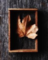 Autumn leaf in a wood shadow box