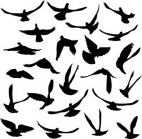 Concept of love or peace. Set of silhouettes of doves
