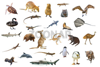 Australian animals isolated