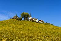 Herbst im Weinanbaugebiet La Côte, Winzerdorf Fechy, Waadt, Schweiz