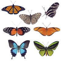 Butterfly collection on White background