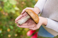 close up of woman hands holding mushroom in forest