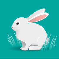 Cute White bunny Rabbit Cartoon Vector Illustration